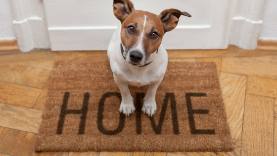 How to clean a house with pets