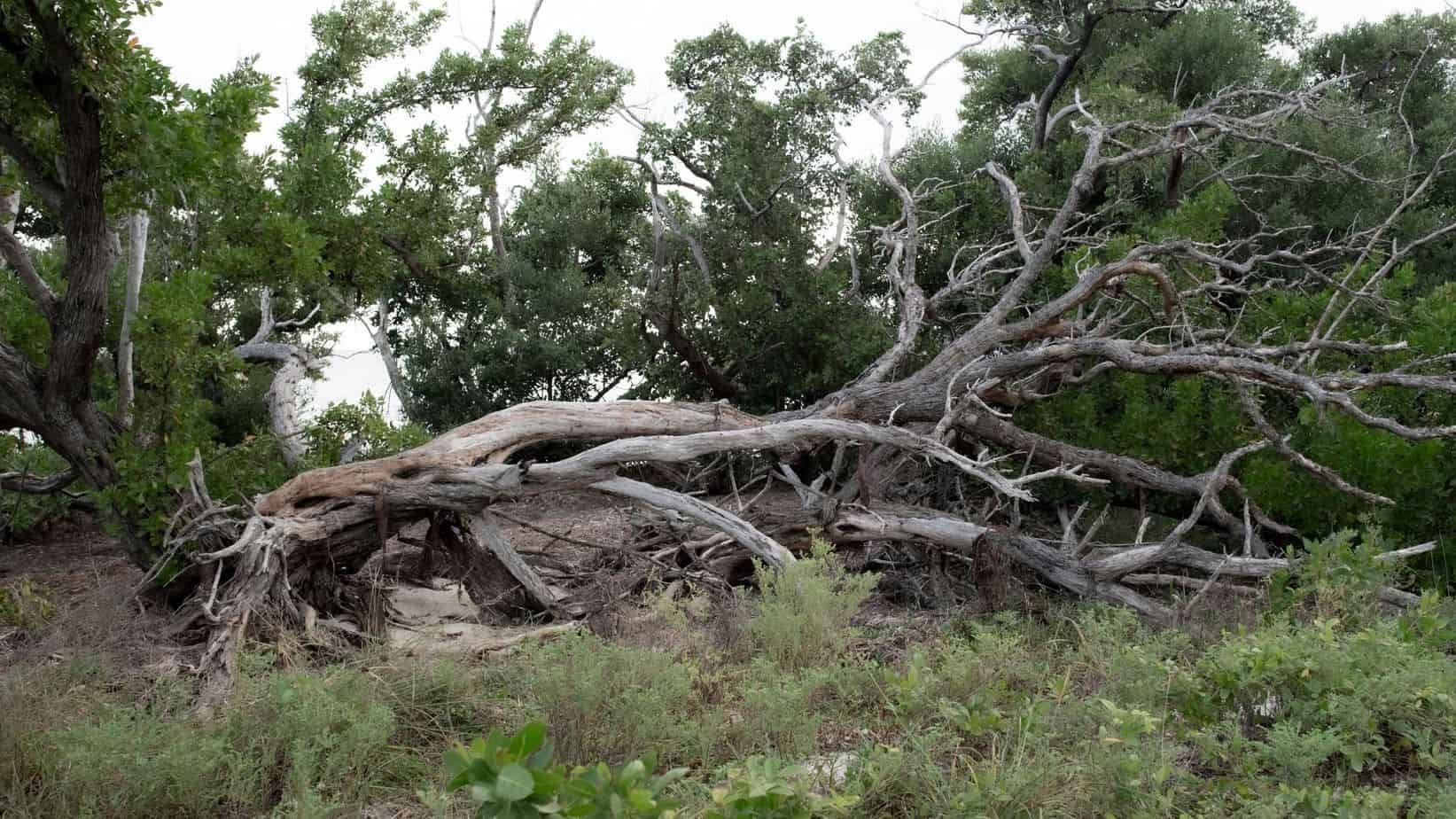 Selling a Home: Are Dead Trees Killing Your Sale?